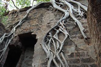 Redi Fort root