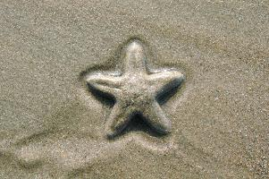 Starfish Kerala Beach