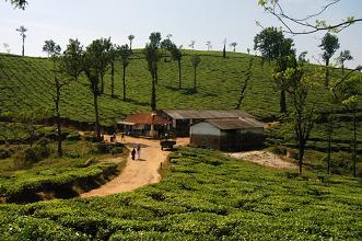 Nilgiri Tea, Kerala