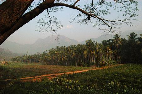 Kerala Picture Scene