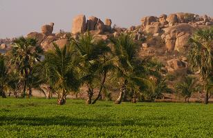 Virupapuragadda Fields
