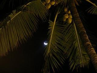 Anjuna night