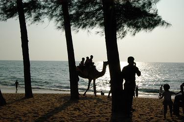 Kappad Beach Camel