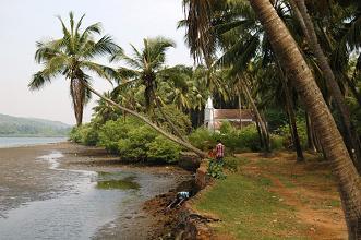 Siolim river bank